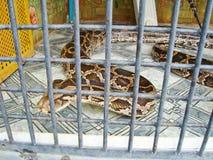 蛇在动物园里 免版税库存照片