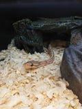 蛇在宠物商店 库存照片