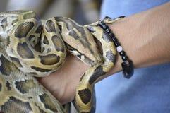 蛇在手边 库存照片