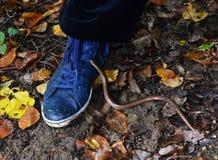 蛇在森林里 库存图片