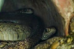 蛇在森林里 免版税库存图片