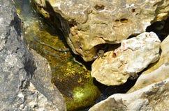 水蛇在黑海(模子蛇, Natrix tessellata) 免版税库存图片