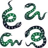 蛇年。 免版税库存图片