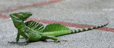 蛇怪绿宝石 免版税库存图片