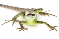 蛇怪绿色 免版税库存照片