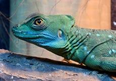 蛇怪蜥蜴饰了以羽毛纵向 免版税图库摄影