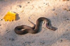 蛇改变老皮革 图库摄影