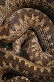 蛇标度 库存照片