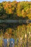 蛇池塘香蒲和秋天反射 库存照片