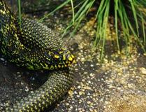 蛇特写镜头的头 免版税库存照片