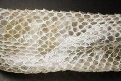 从蛇的老皮肤 免版税库存照片