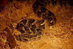 蛇的陈列 图库摄影