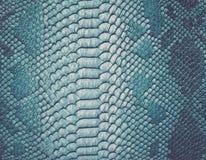 蛇皮背景 免版税库存图片
