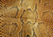蛇皮 免版税图库摄影