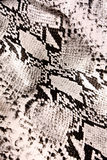蛇纹理 图库摄影