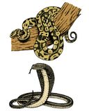 蛇蝎蛇 蛇眼镜蛇和Python、水蟒或者蛇蝎,皇家 刻记手拉在老剪影,葡萄酒样式为 库存例证