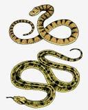 蛇蝎蛇 蛇眼镜蛇和Python、水蟒或者蛇蝎,皇家 刻记手拉在老剪影,葡萄酒样式为 皇族释放例证