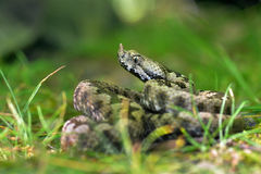 蛇蝎 免版税库存图片