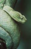 蛇蝎 免版税库存照片