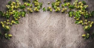 蛇麻草与黑暗的土气背景毗邻 库存照片
