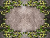 蛇麻草在黑暗的土气背景构筑 库存照片