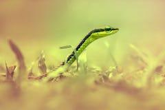 蛇,动物, 库存图片