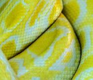 蛇黄色皮肤 免版税库存图片