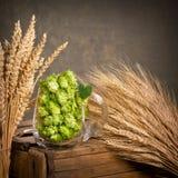 蛇麻草和大麦 库存照片