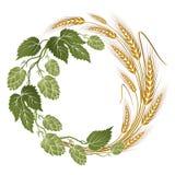 蛇麻草和麦子构成啤酒标签的 向量例证