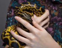 蛇水蟒在妇女` s手上 免版税库存图片
