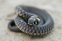 蛇 免版税图库摄影