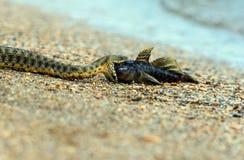 水蛇 库存图片