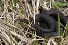 蛇水 库存照片