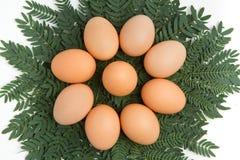 蛋叶子 向量例证