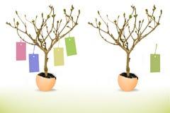 蛋壳生长价牌结构树 免版税图库摄影