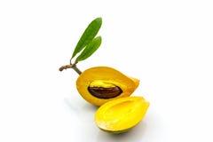 蛋果子, Canistel,黄色美洲热带树 免版税库存照片