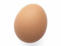 蛋母鸡 免版税图库摄影