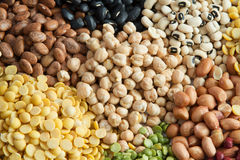 蛋白质植物 免版税库存照片
