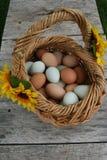 蛋篮子 免版税库存照片