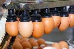 蛋线路生产 免版税库存图片