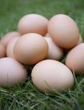蛋自由放养有机 库存图片