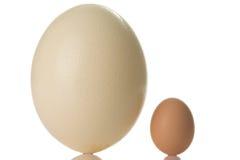 蛋驼鸟 免版税图库摄影