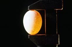 蛋绑制钳。 图库摄影
