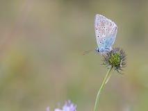蛛丝飞过的蝴蝶 库存图片