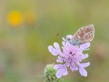 蛛丝飞过的蝴蝶 库存照片