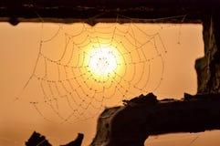 水蛛丝滴在背景红色薄雾和朝阳的 选择聚焦 免版税库存图片
