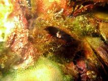 蛤蜊产生 库存照片