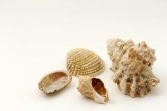 蛤蜊和壳的汇集 库存照片
