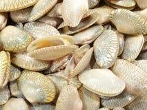 蛤蜊在新鲜食物市场上 库存图片