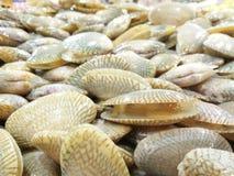 蛤蜊在新鲜食物市场上 图库摄影